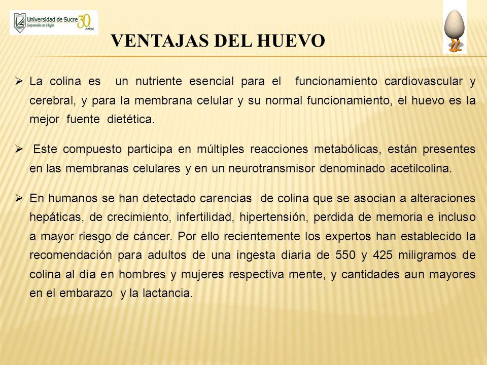 VENTAJAS DEL HUEVO La colina es un nutriente esencial para el funcionamiento cardiovascular y cerebral, y para la membrana celular y su normal funcion