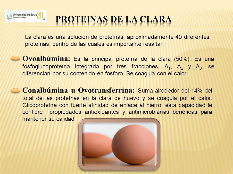 Ovoalbúmina: Es la principal proteína de la clara (50%); Es una fosfoglucoproteína integrada por tres fracciones, A 1, A 2 y A 3, se diferencian por s