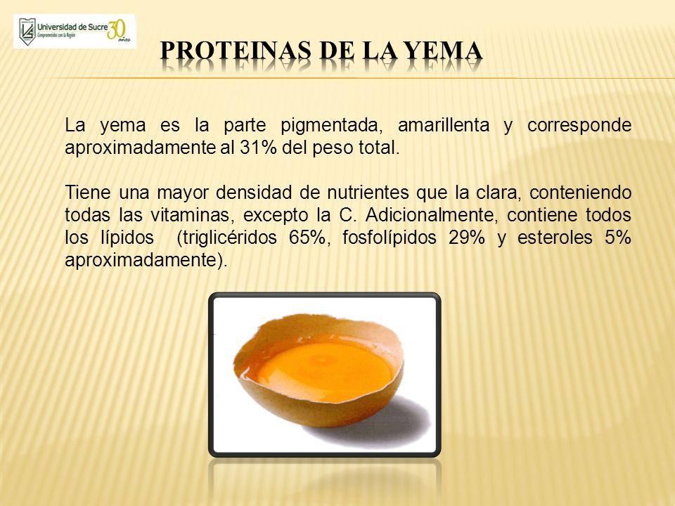 La yema es la parte pigmentada, amarillenta y corresponde aproximadamente al 31% del peso total. Tiene una mayor densidad de nutrientes que la clara,