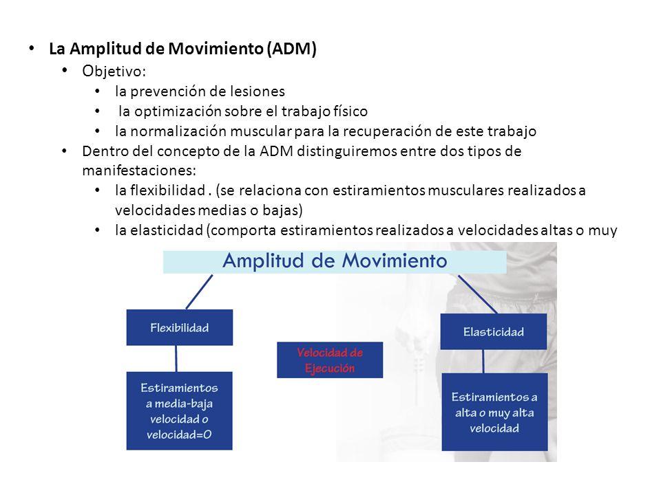 La Amplitud de Movimiento (ADM) O bjetivo: la prevención de lesiones la optimización sobre el trabajo físico la normalización muscular para la recuper