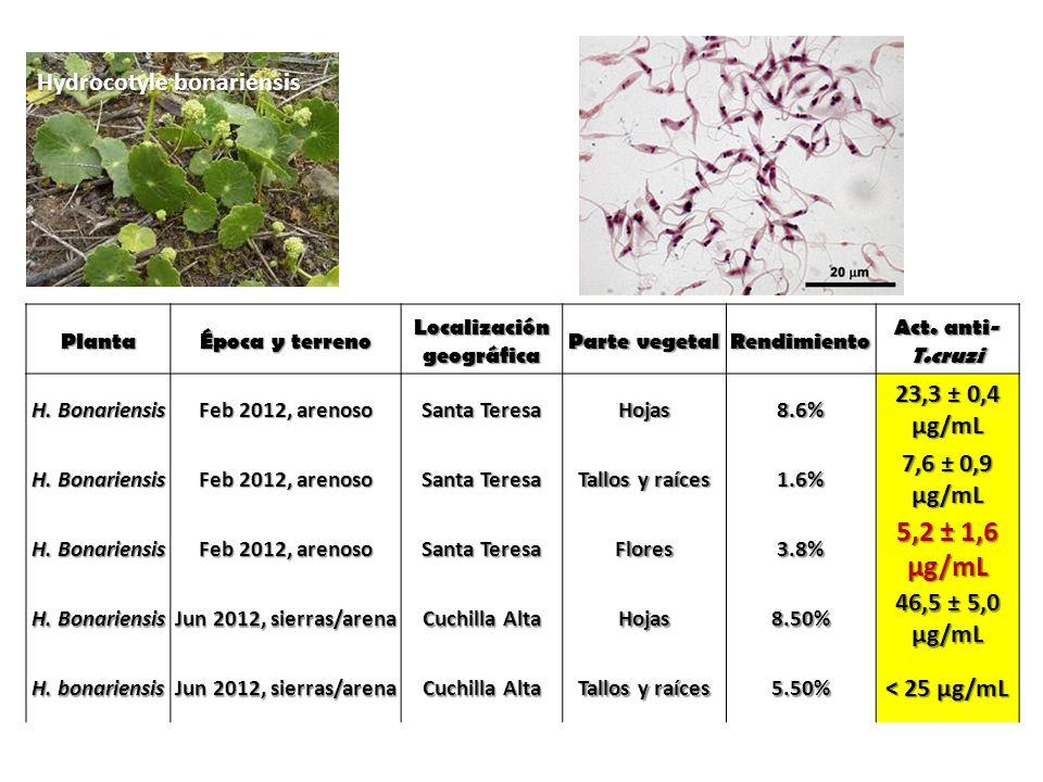 Hydrocotyle bonariensis Planta Época y terreno Localización geográfica Parte vegetal Rendimiento Act. anti- T.cruzi H. Bonariensis Feb 2012, arenoso S
