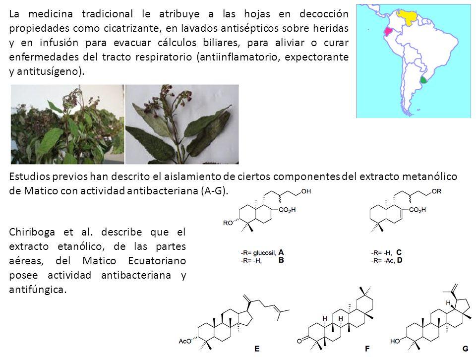 La medicina tradicional le atribuye a las hojas en decocción propiedades como cicatrizante, en lavados antisépticos sobre heridas y en infusión para e