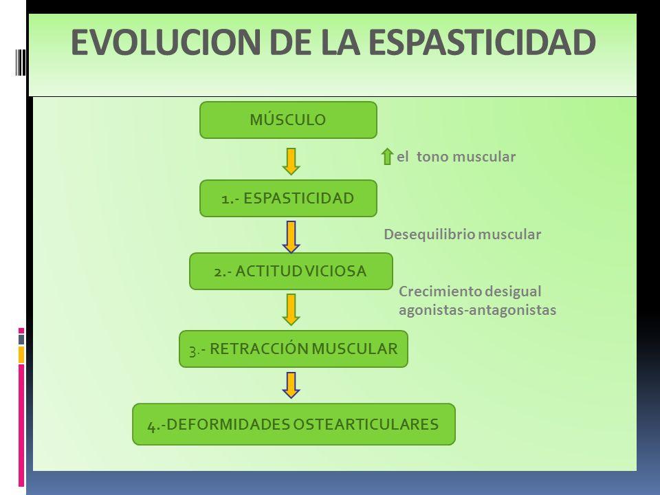 EVOLUCION DE LA ESPASTICIDAD MÚSCULO 1.- ESPASTICIDAD 2.- ACTITUD VICIOSA 3.- RETRACCIÓN MUSCULAR 4.-DEFORMIDADES OSTEARTICULARES el tono muscular Des