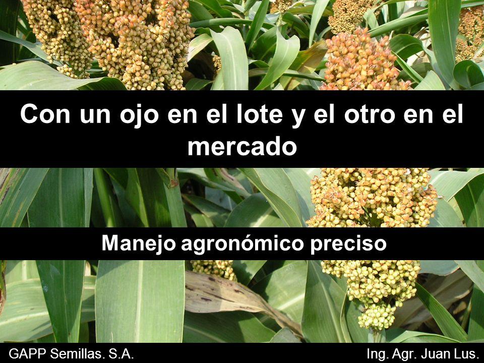 Importancia mundial del sorgo Quinto cereal en importancia mundial.