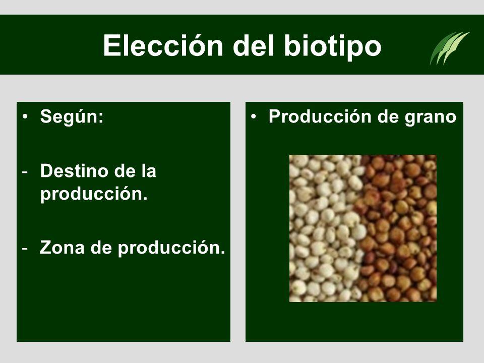 Elección del biotipo Según: -Destino de la producción. -Zona de producción. Producción de grano