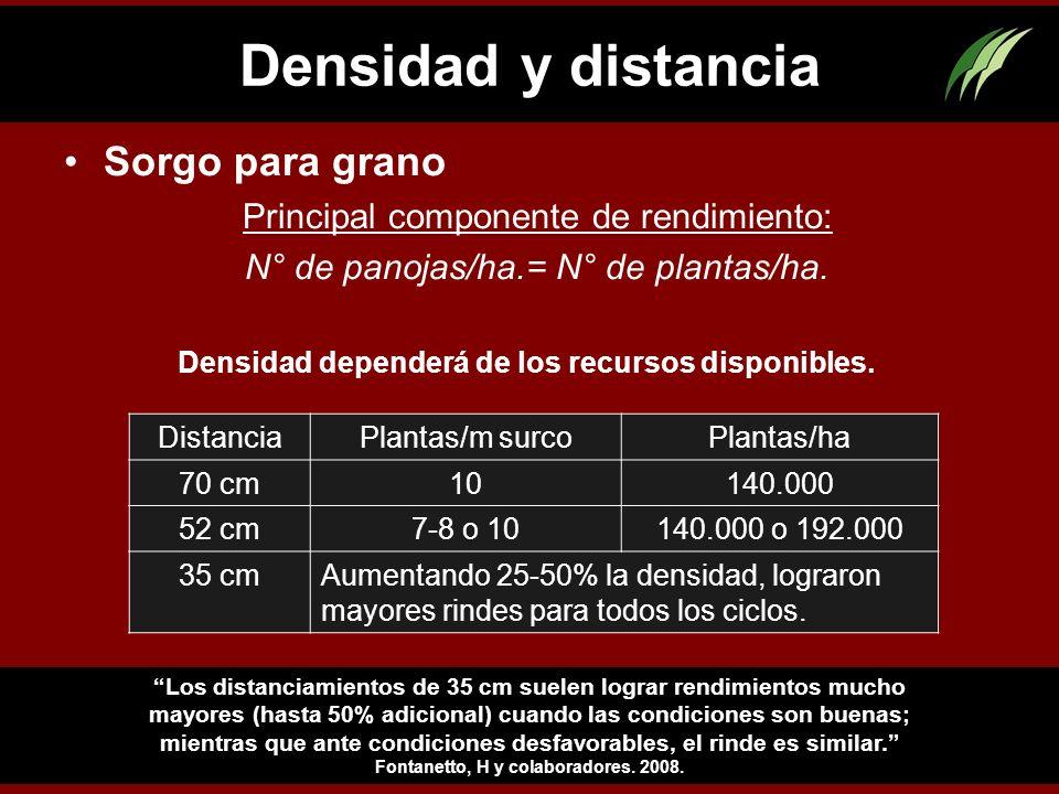 Densidad y distancia Sorgo para grano Principal componente de rendimiento: N° de panojas/ha.= N° de plantas/ha. Densidad dependerá de los recursos dis