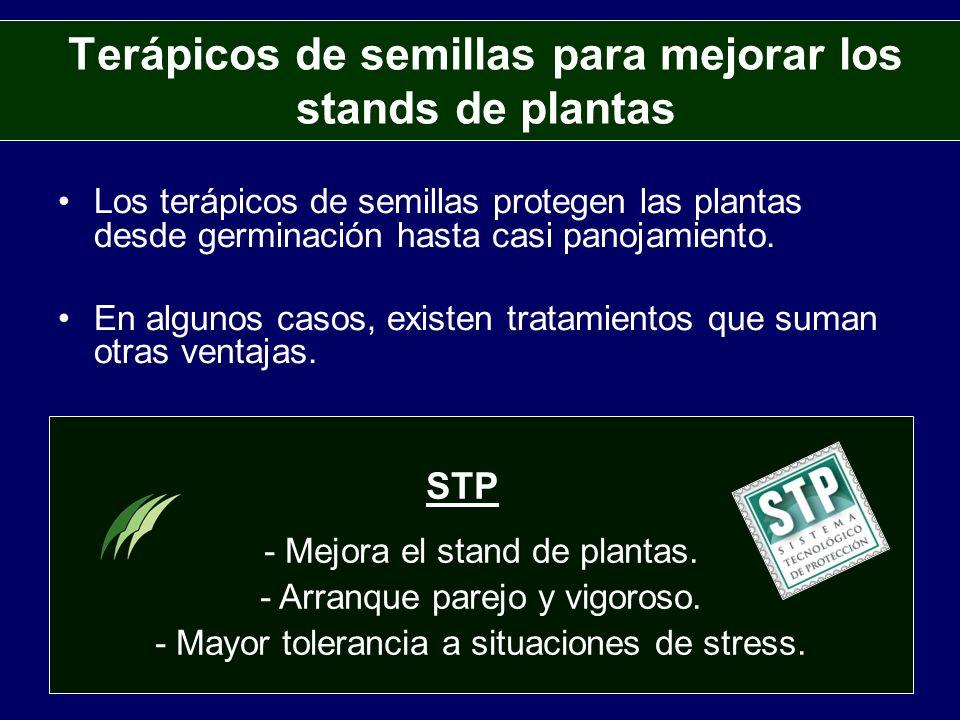 Terápicos de semillas para mejorar los stands de plantas Los terápicos de semillas protegen las plantas desde germinación hasta casi panojamiento. En
