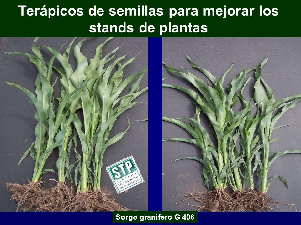 Terápicos de semillas para mejorar los stands de plantas Sorgo granífero G 406