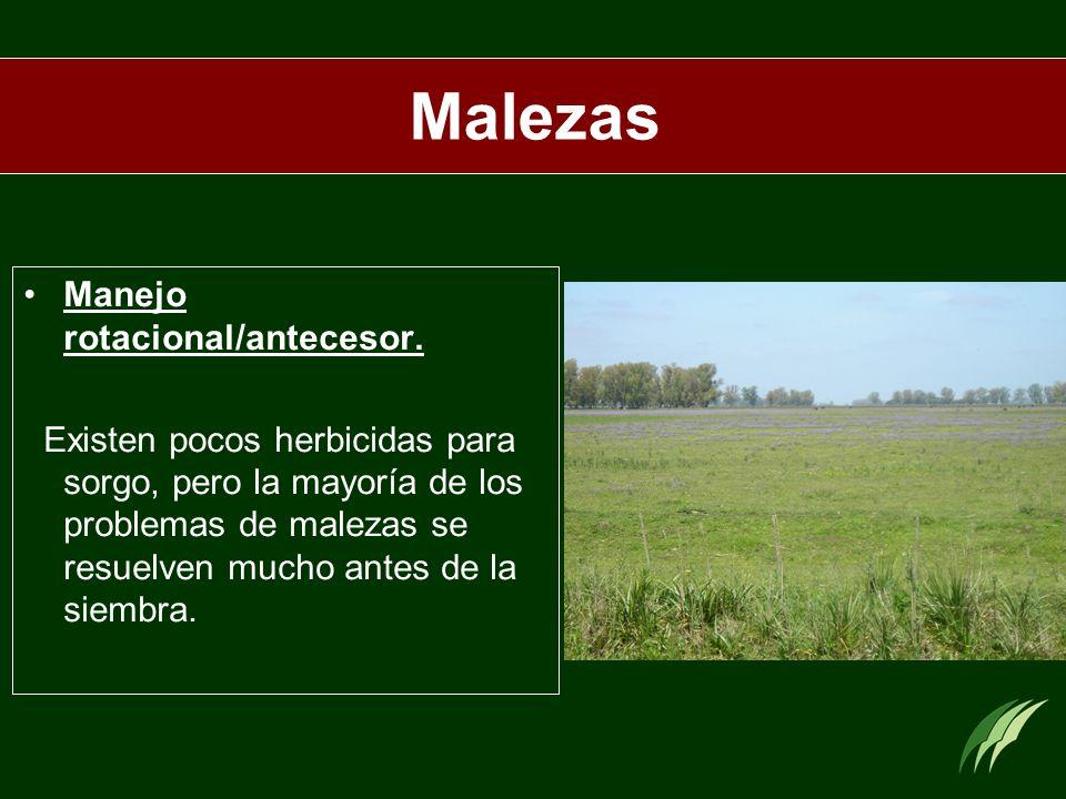 Malezas Manejo rotacional/antecesor. Existen pocos herbicidas para sorgo, pero la mayoría de los problemas de malezas se resuelven mucho antes de la s