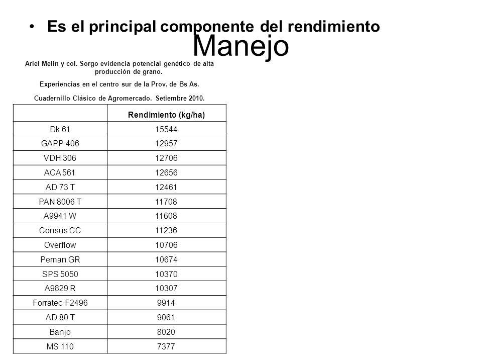 Manejo Es el principal componente del rendimiento Ariel Melin y col. Sorgo evidencia potencial genético de alta producción de grano. Experiencias en e