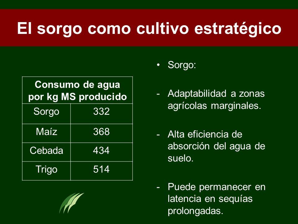 El sorgo como cultivo estratégico Sorgo: -Adaptabilidad a zonas agrícolas marginales. -Alta eficiencia de absorción del agua de suelo. -Puede permanec