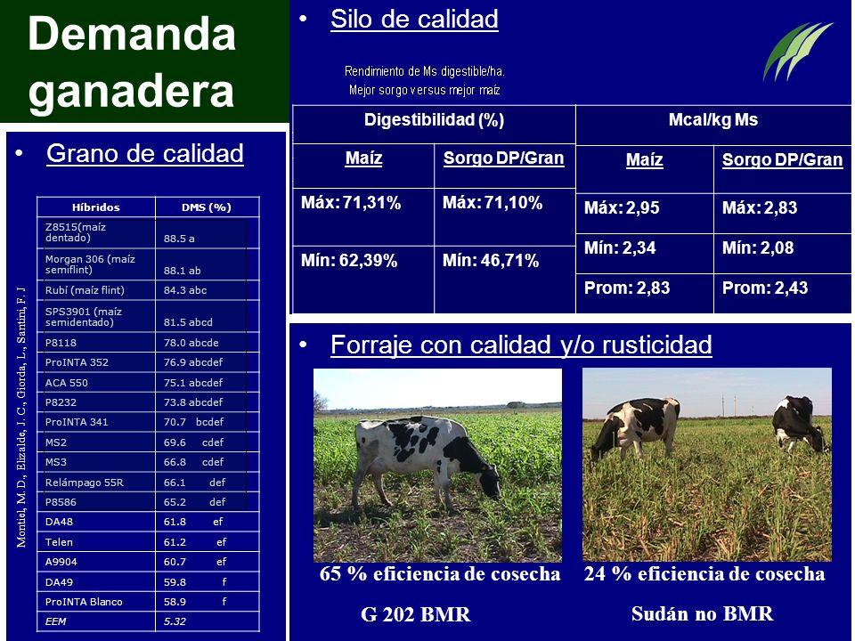Demanda ganadera Grano de calidad Forraje con calidad y/o rusticidad Silo de calidad HíbridosDMS (%) Z8515(maíz dentado)88.5 a Morgan 306 (maíz semifl