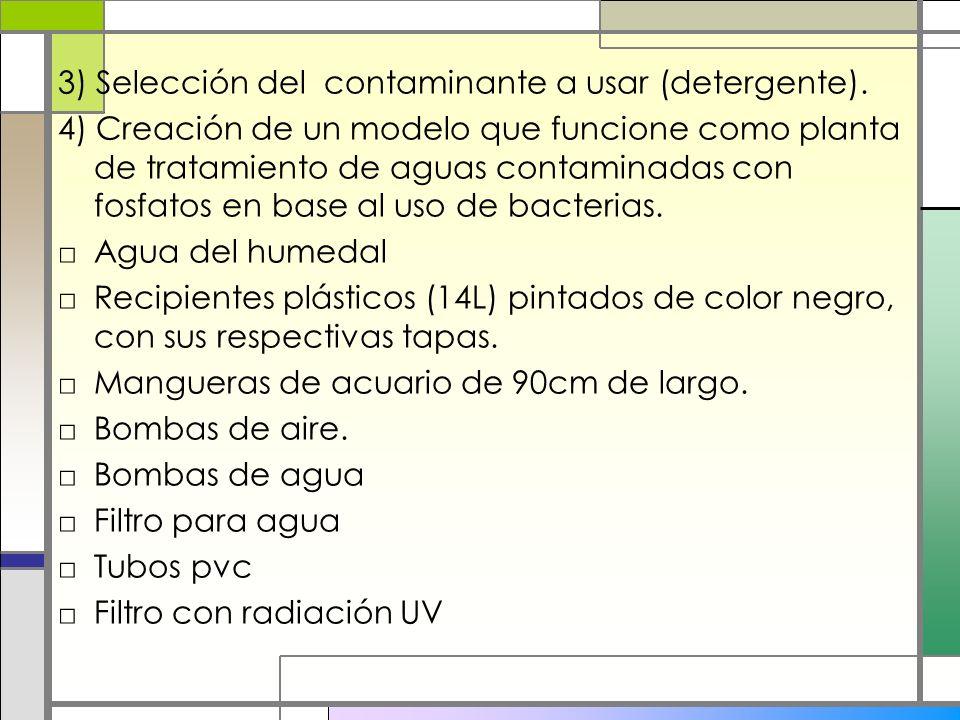 3) Selección del contaminante a usar (detergente). 4) Creación de un modelo que funcione como planta de tratamiento de aguas contaminadas con fosfatos