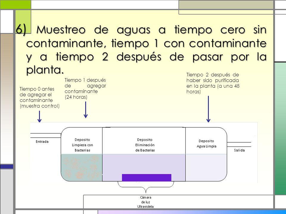 6) Muestreo de aguas a tiempo cero sin contaminante, tiempo 1 con contaminante y a tiempo 2 después de pasar por la planta. Tiempo 0 antes de agregar