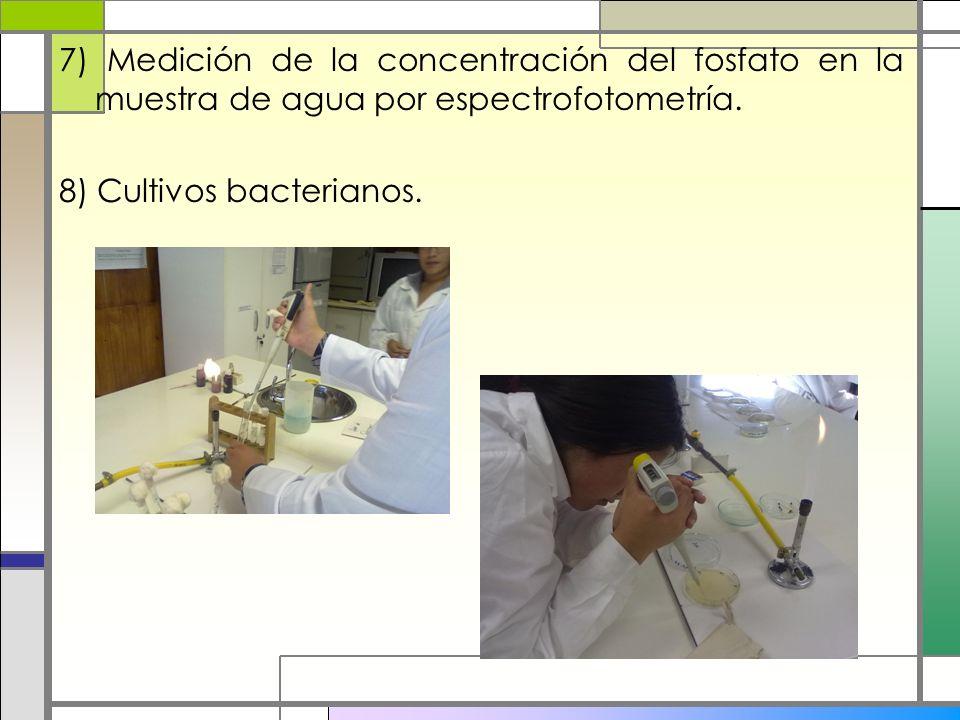 7) Medición de la concentración del fosfato en la muestra de agua por espectrofotometría. 8) Cultivos bacterianos.