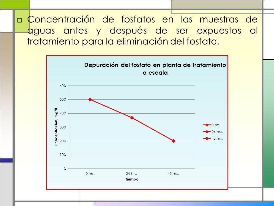 Concentración de fosfatos en las muestras de aguas antes y después de ser expuestos al tratamiento para la eliminación del fosfato.