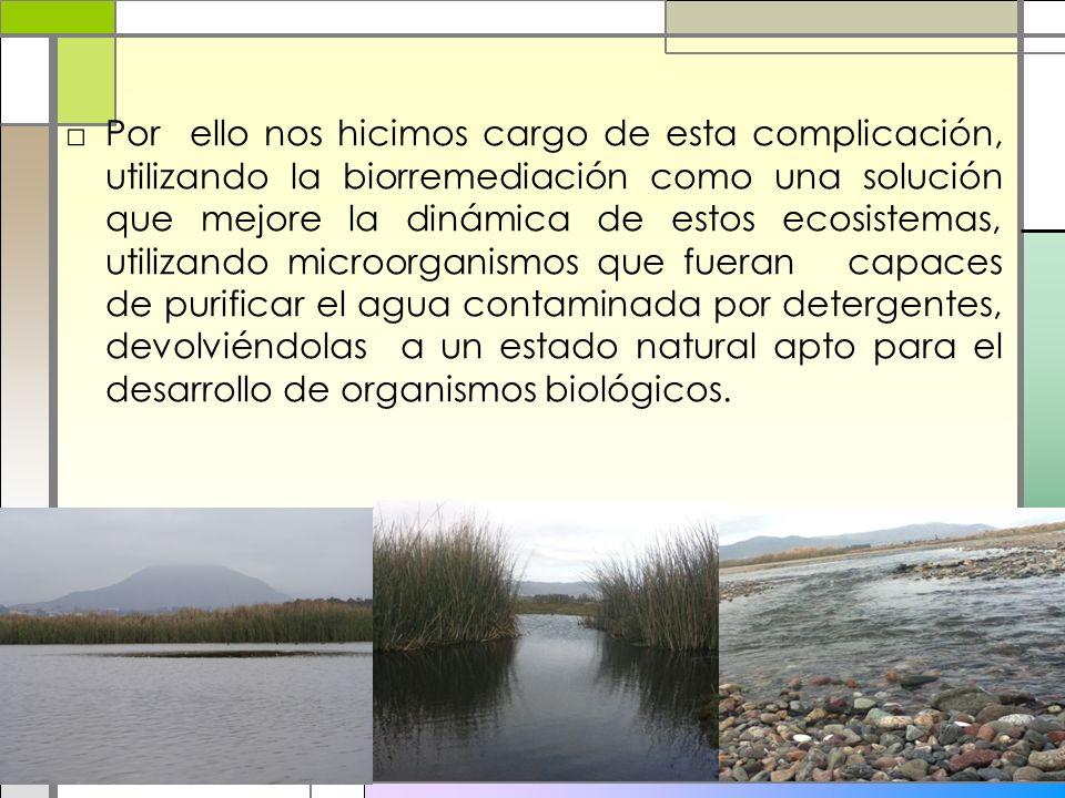 Por ello nos hicimos cargo de esta complicación, utilizando la biorremediación como una solución que mejore la dinámica de estos ecosistemas, utilizando microorganismos que fueran capaces de purificar el agua contaminada por detergentes, devolviéndolas a un estado natural apto para el desarrollo de organismos biológicos.