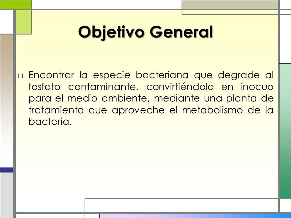 Objetivo General Encontrar la especie bacteriana que degrade al fosfato contaminante, convirtiéndolo en inocuo para el medio ambiente, mediante una planta de tratamiento que aproveche el metabolismo de la bacteria.