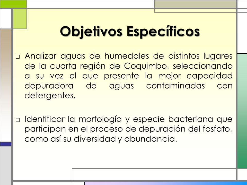 Objetivos Específicos Analizar aguas de humedales de distintos lugares de la cuarta región de Coquimbo, seleccionando a su vez el que presente la mejo