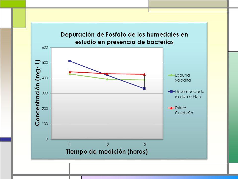 Metodología 1) Selección del humedal con mejor depuración de fosfato en nuestra región el cual fue el humedal de la desembocadura del Río Elqui