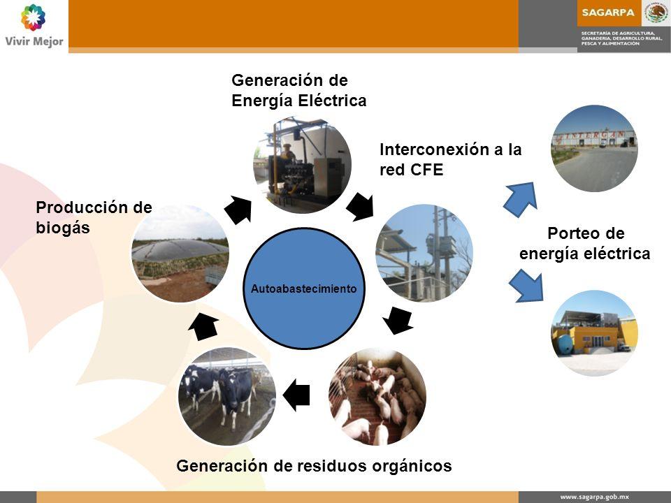 Generación de residuos orgánicos Producción de biogás Generación de Energía Eléctrica Interconexión a la red CFE Porteo de energía eléctrica Autoabast