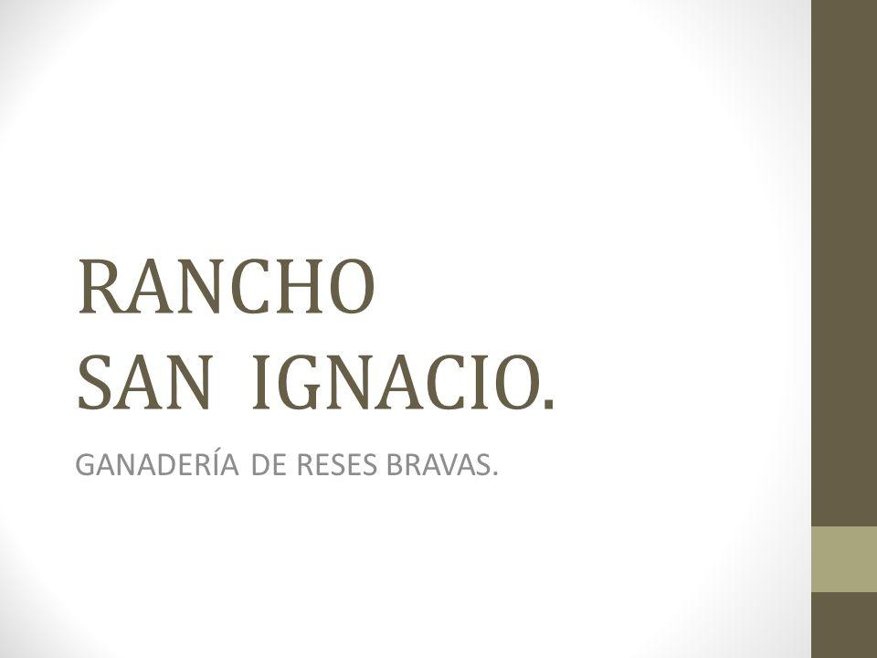 RANCHO SAN IGNACIO. GANADERÍA DE RESES BRAVAS.
