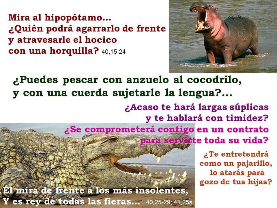 Mira al hipopótamo… ¿Quién podrá agarrarlo de frente y atravesarle el hocico con una horquilla? 40,15.24 Él mira de frente a los más insolentes, Y es