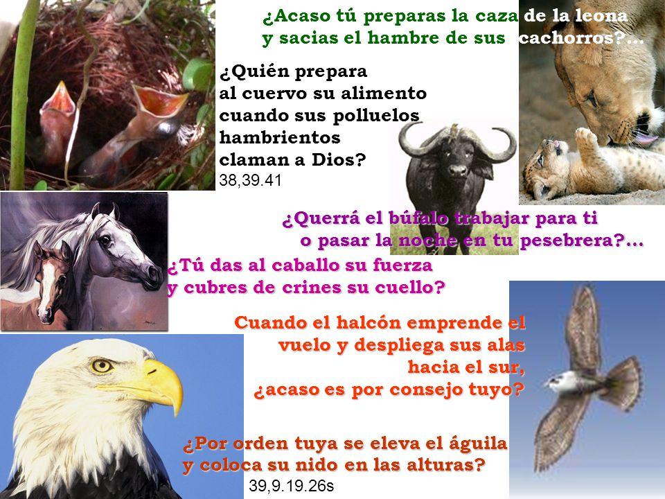 ¿Quién prepara al cuervo su alimento cuando sus polluelos hambrientos claman a Dios? 38,39.41 ¿Tú das al caballo su fuerza y cubres de crines su cuell