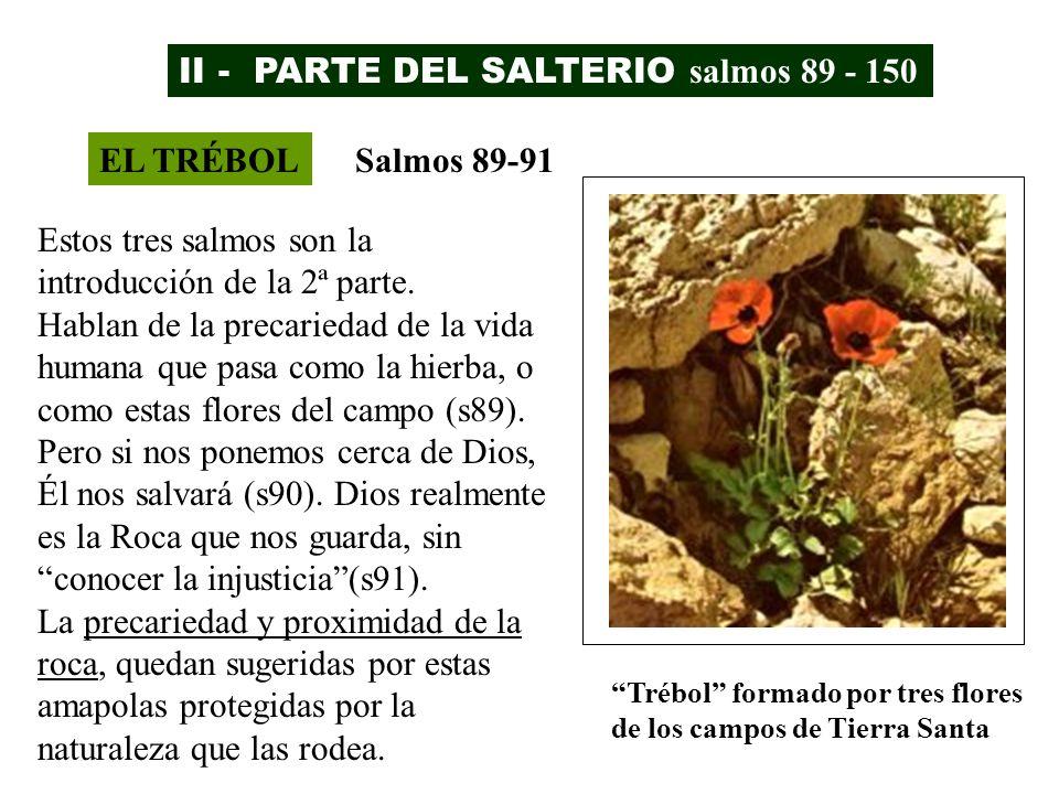 II - PARTE DEL SALTERIO salmos 89 - 150 EL TRÉBOLSalmos 89-91 Estos tres salmos son la introducción de la 2ª parte. Hablan de la precariedad de la vid