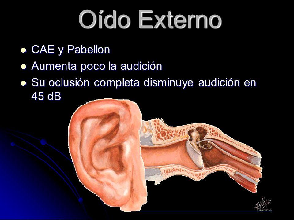 Oído Externo CAE y Pabellon CAE y Pabellon Aumenta poco la audición Aumenta poco la audición Su oclusión completa disminuye audición en 45 dB Su oclusión completa disminuye audición en 45 dB