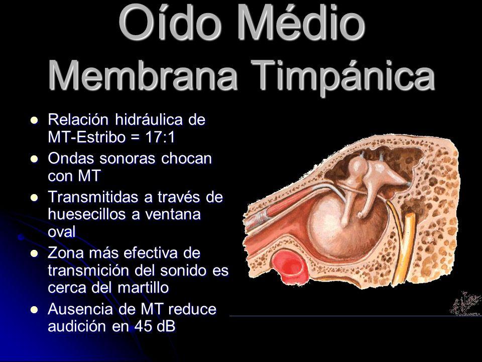 Hipoacusia Neurosensorial Congénita: a-Endógena (genetica) b-Exogena (intrauterino) Congénita: a-Endógena (genetica) b-Exogena (intrauterino) Febril: estado febril tóxico en niñez Febril: estado febril tóxico en niñez Ototoxica Ototoxica Hereditaria progresiva: Fam.