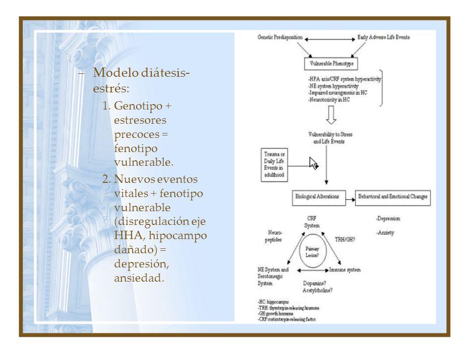 –Modelo diátesis- estrés: 1.Genotipo + estresores precoces = fenotipo vulnerable. 2.Nuevos eventos vitales + fenotipo vulnerable (disregulación eje HH