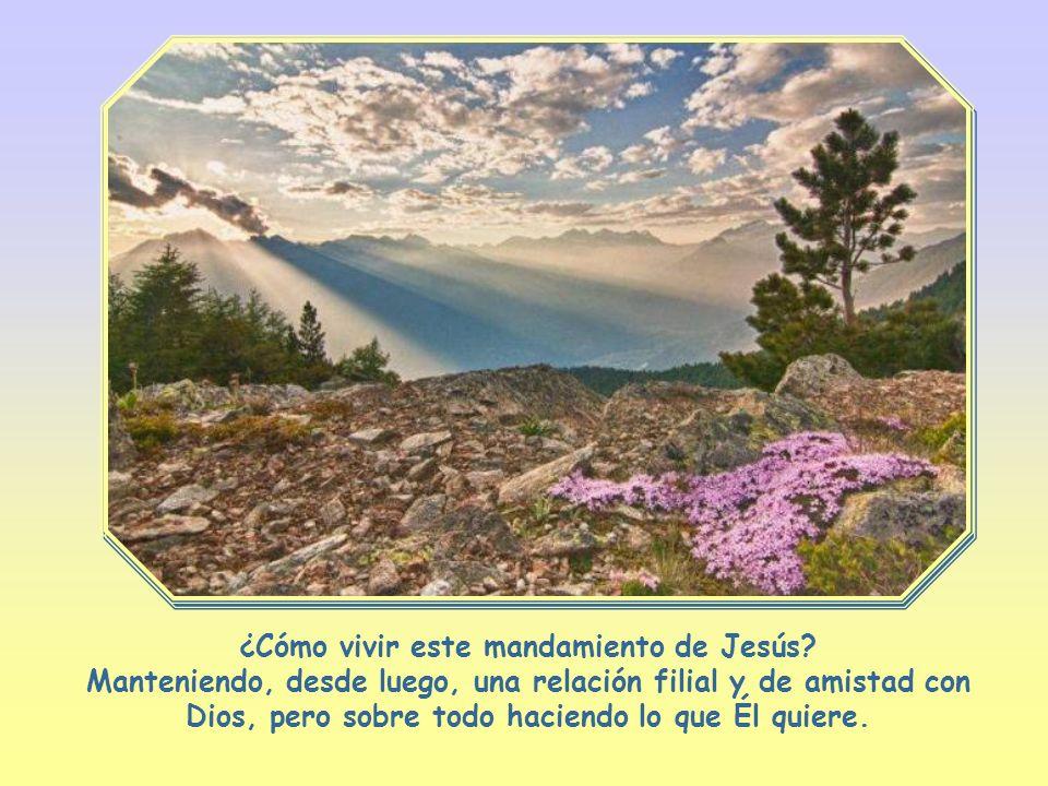 Amarás al Señor tu Dios con todo tu corazón, con toda tu alma y con toda tu inteligencia.
