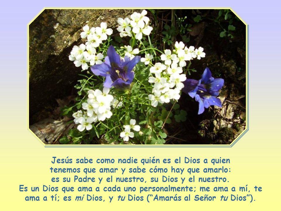 Sus discípulos no pueden disociar estos dos amores, así como en un árbol no se pueden separar las raíces de la copa: cuanto más aman a Dios, más inten