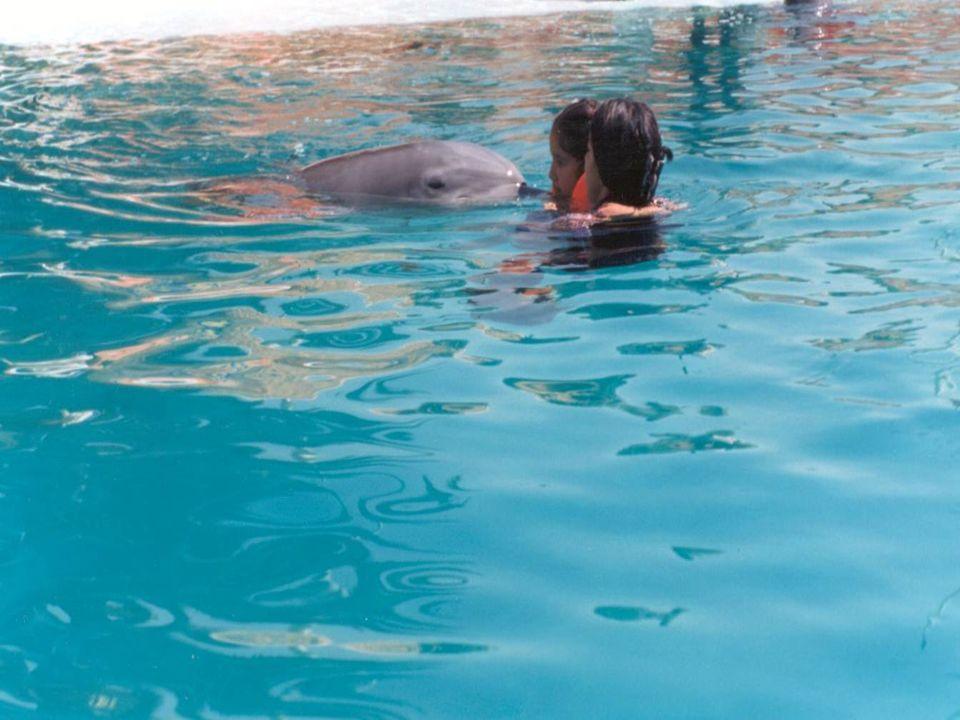 Estas condiciones obligan a la búsqueda e investigación de nuevas alternativas terapéuticas como lo puede ser la terapia asistida por delfines.
