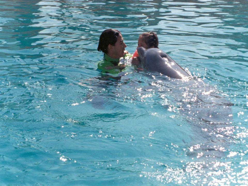 El delfín es un vertebrado que pertenece a la clase mamífero, del orden cetáceo, del suborden odontoceto y de la familia de los delfínidos. Se conocen