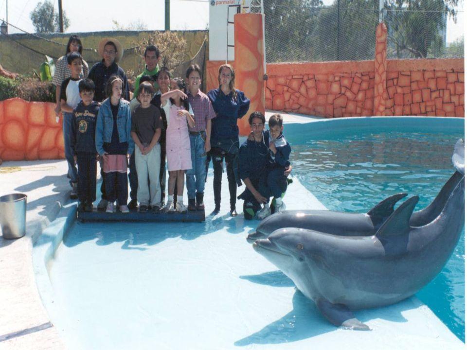 Proponiendo como mecanismo subyacente de tales cambios a los efectos fisiológicos del ultrasonido del biosonar del cetáceo, los cuales muestran efecto