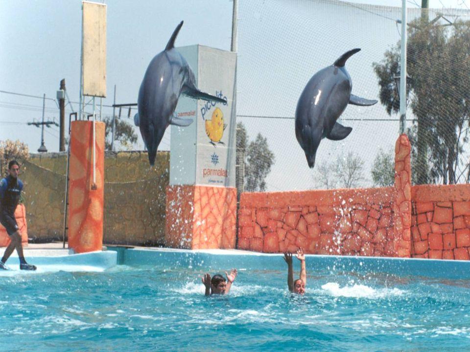 Objetivo. Determinar el efecto neurométrico y psicométrico de ocho sesiones de terapia asistida por delfines (Tursiops truncatus) en un grupo de 10 ni