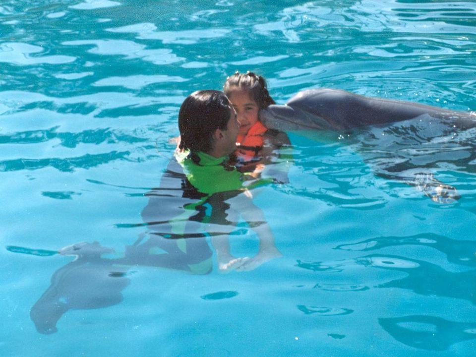 2.- A continuación se sometió a cada niño a ocho sesiones, de 15 minutos cada una, de interacción terapéutica con un delfín de la especie Tursiops tru