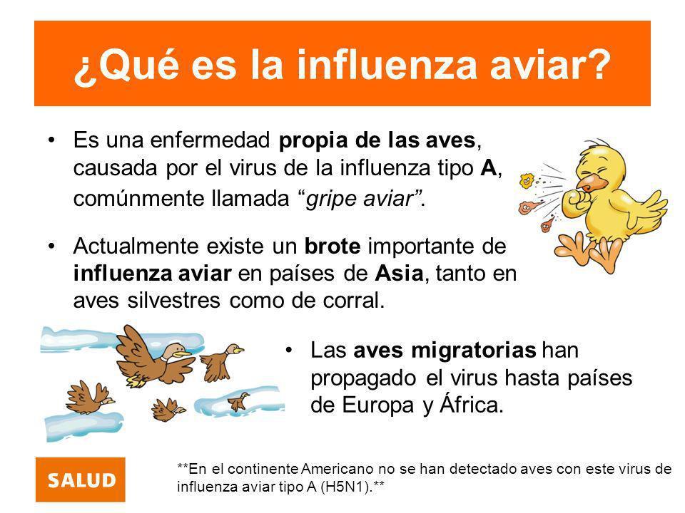 ¿Qué es la influenza aviar? Es una enfermedad propia de las aves, causada por el virus de la influenza tipo A, comúnmente llamada gripe aviar. Actualm