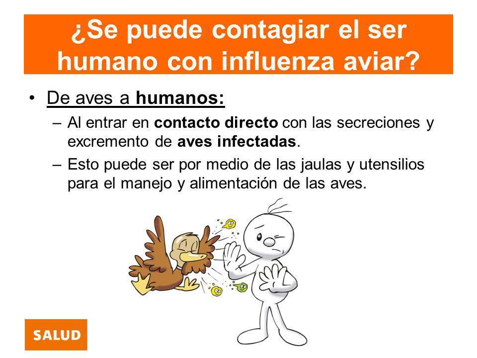 ¿Se puede contagiar el ser humano con influenza aviar? De aves a humanos: –Al entrar en contacto directo con las secreciones y excremento de aves infe