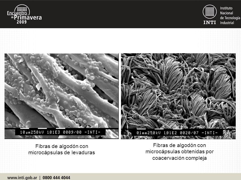 Fibras de algodón con microcápsulas obtenidas por coacervación compleja Fibras de algodón con microcápsulas de levaduras