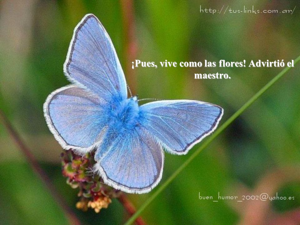 ¡Pues, vive como las flores! Advirtió el maestro.