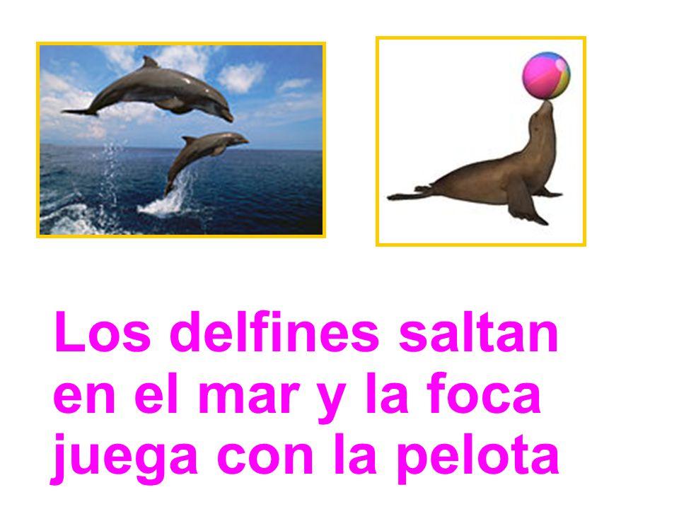 Los delfines y la tortuga nadan en el mar
