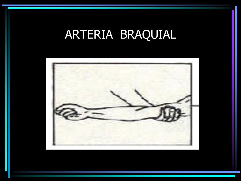ARTERIA BRAQUIAL