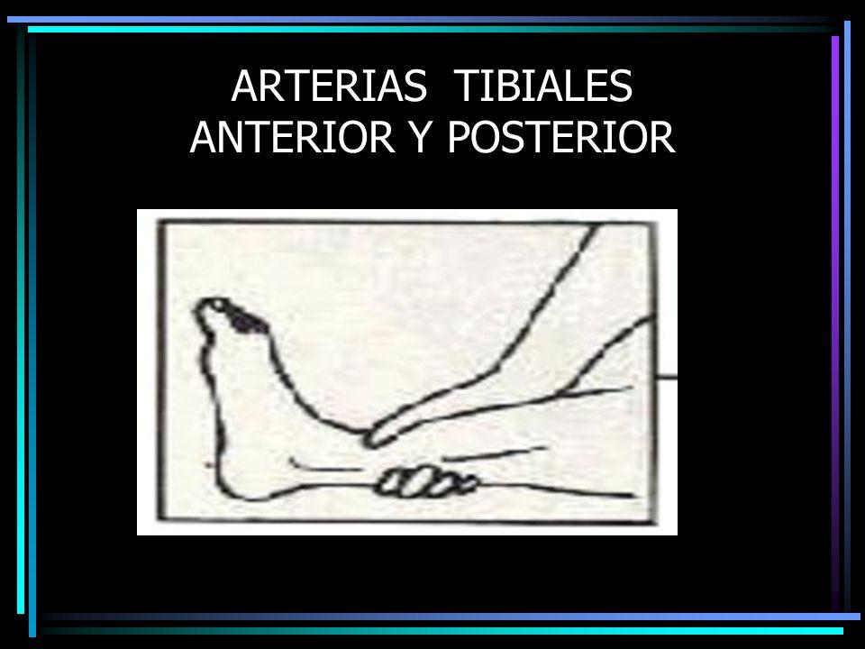 ARTERIAS TIBIALES ANTERIOR Y POSTERIOR