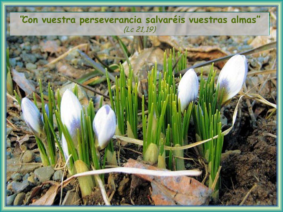 Con vuestra perseverancia salvaréis vuestras almas (Lc 21,19)