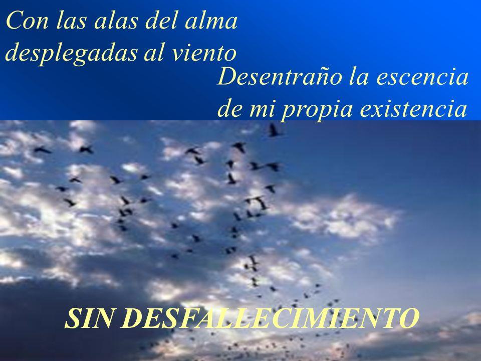 Con las alas del alma desplegadas al viento Desentraño la escencia de mi propia existencia SIN DESFALLECIMIENTO