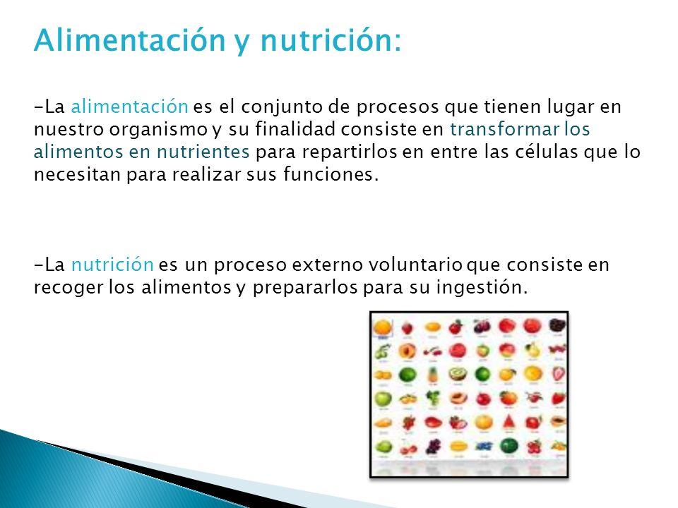 Alimentación y nutrición: -La alimentación es el conjunto de procesos que tienen lugar en nuestro organismo y su finalidad consiste en transformar los alimentos en nutrientes para repartirlos en entre las células que lo necesitan para realizar sus funciones.