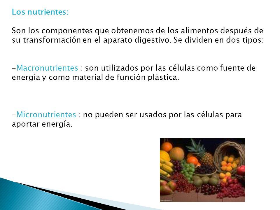 Los nutrientes: Son los componentes que obtenemos de los alimentos después de su transformación en el aparato digestivo.